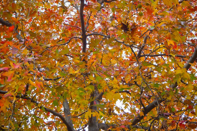 Японский лес осени парка в изображении токио стоковые фото