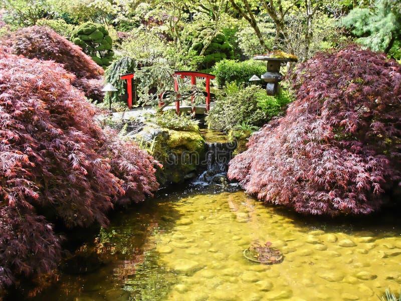 японский пруд стоковая фотография