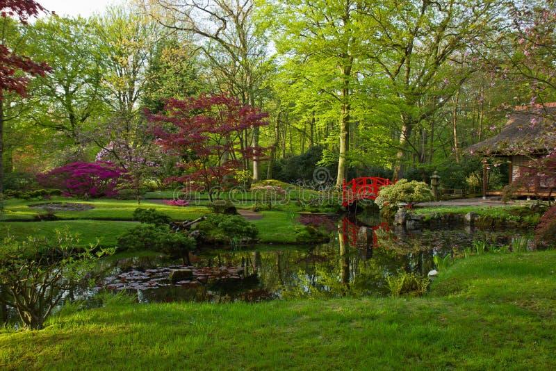 Японский сад весной стоковое изображение rf