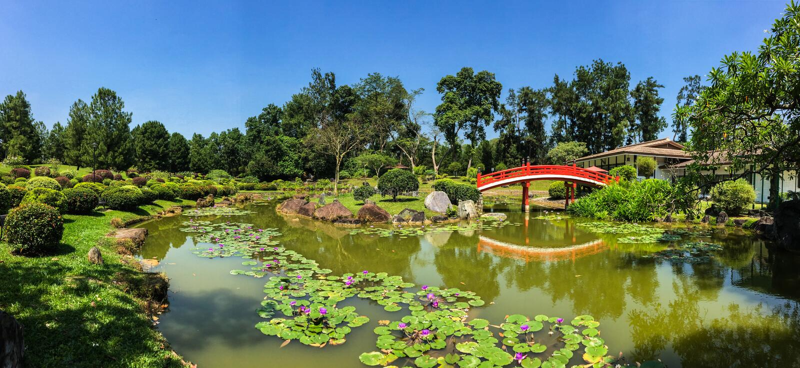 Японский сад с красным мостом и прудом стоковое изображение rf