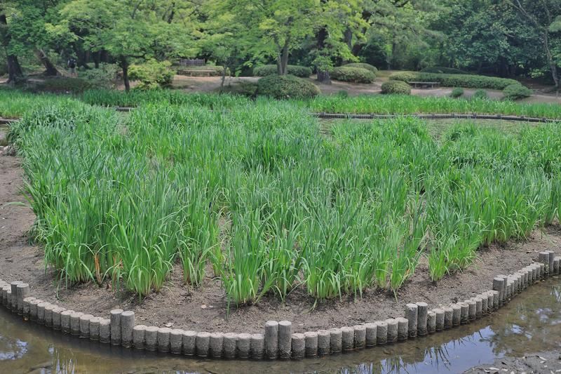 Японский сад с прудом и рекой, садом Ritsurin стоковые фотографии rf