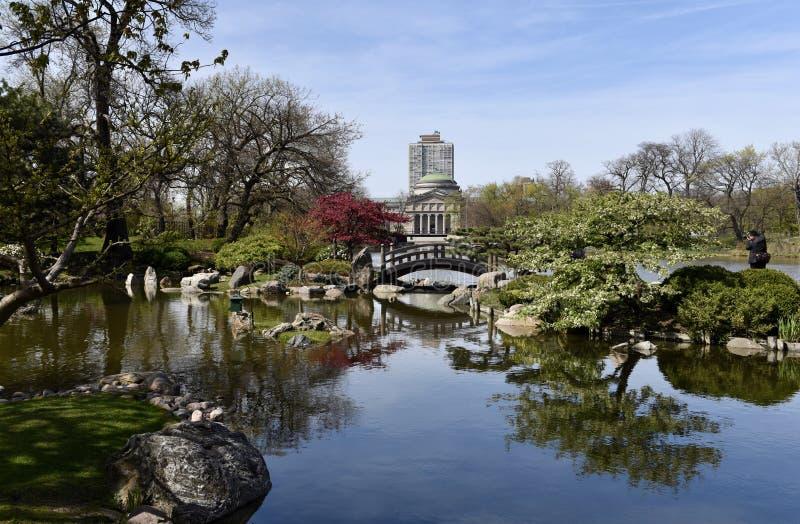 Японский сад на парке Джексона стоковые фотографии rf