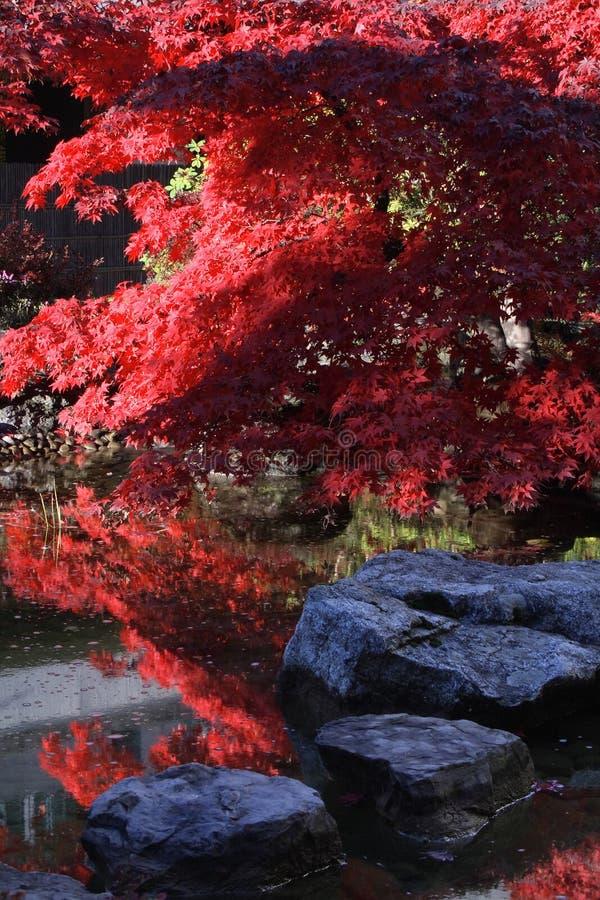 японско стоковые фото