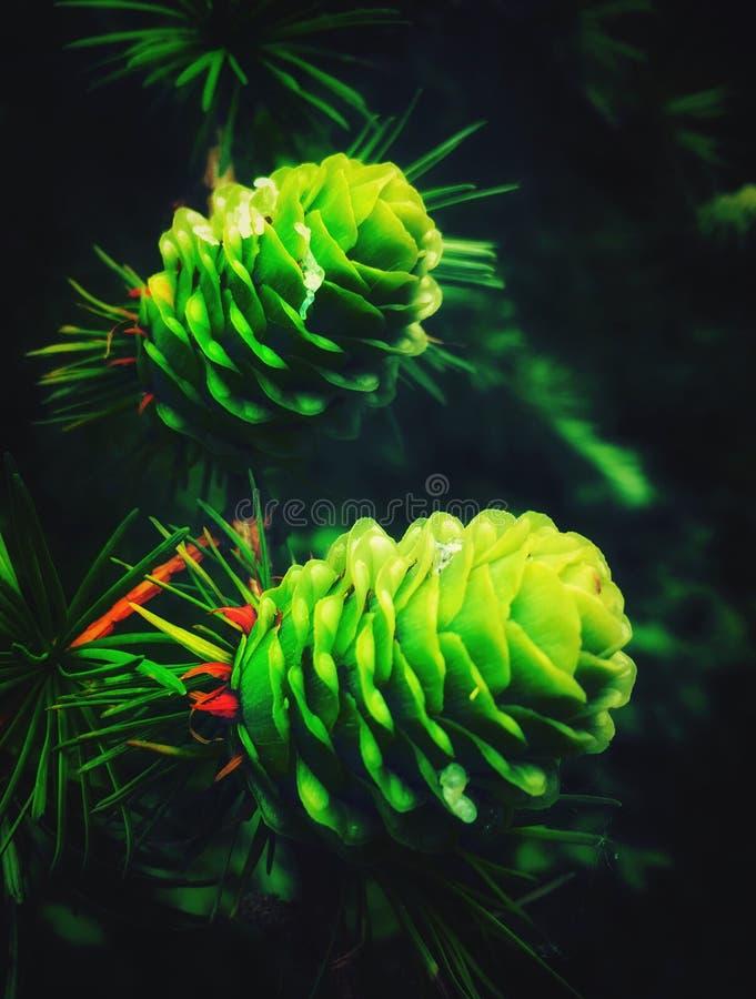 Яркая ая-зелен жизнь в последней весне стоковое изображение rf