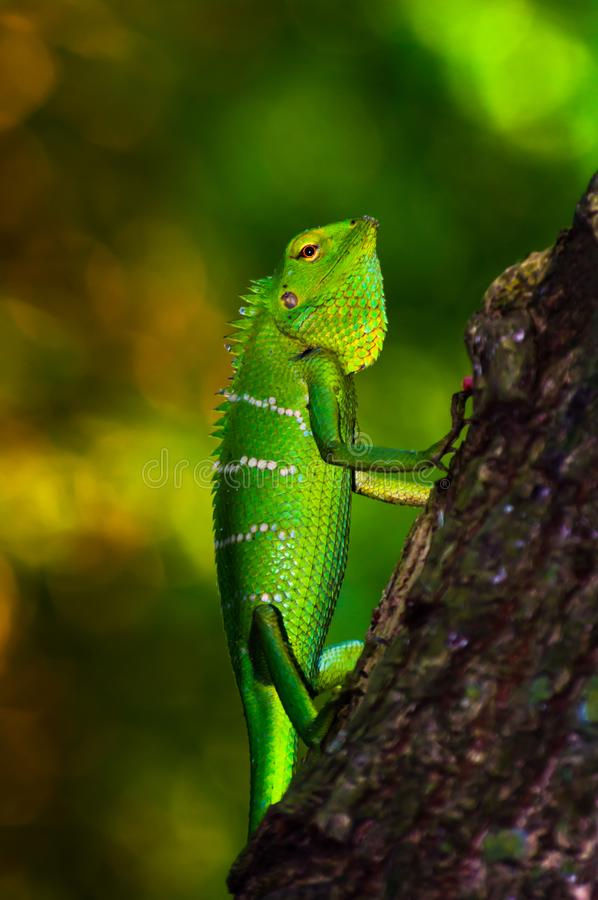 Яркая ая-зелен масштабированная ящерица леса стоковые изображения
