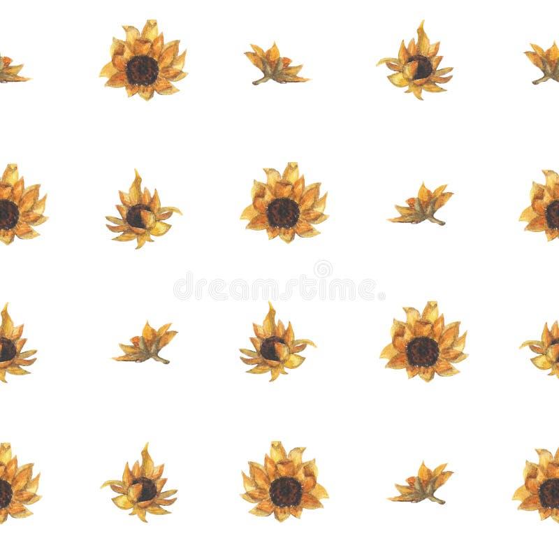 Яркая безшовная картина с солнцецветами Цветки акварели руки вычерченные иллюстрация штока