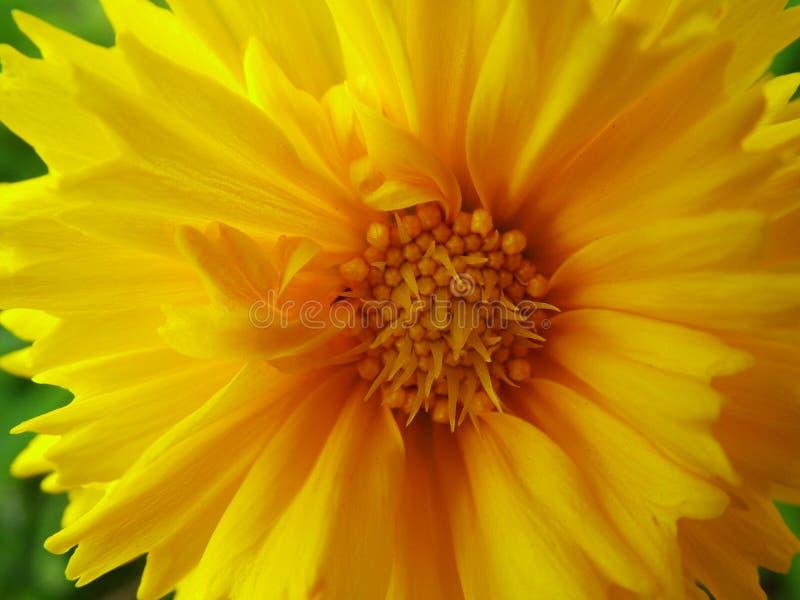 Яркая весна Бесплатные Стоковые Изображения