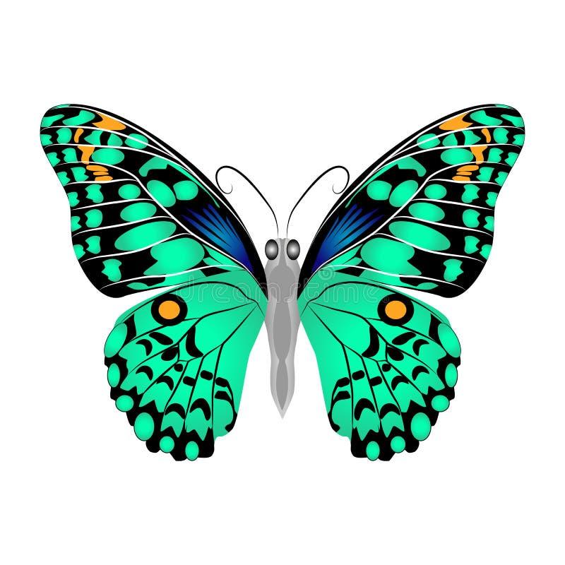 Яркая красивая зеленая бабочка Изолированная иллюстрация вектора