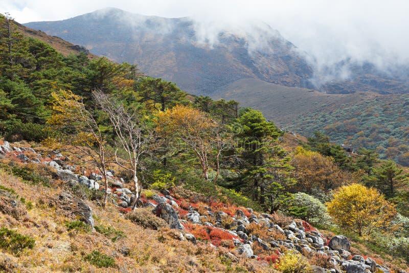 Яркая красочная текстура лесных деревьев, горы Непала стоковая фотография rf