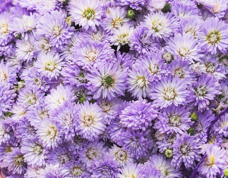 Яркая маленькая фиолетовая предпосылка пука цветков стоковые изображения