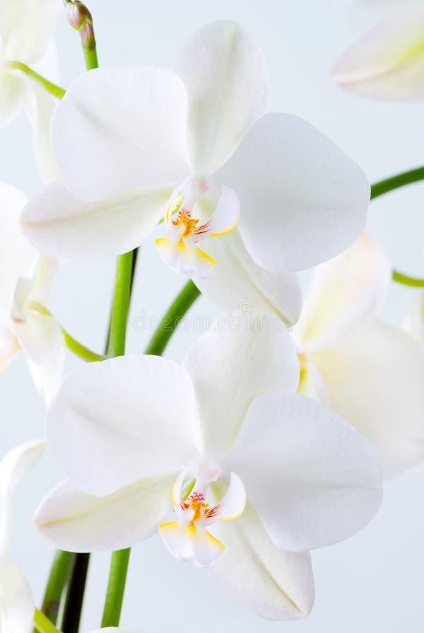 Яркая орхидея. Стоковые Фото
