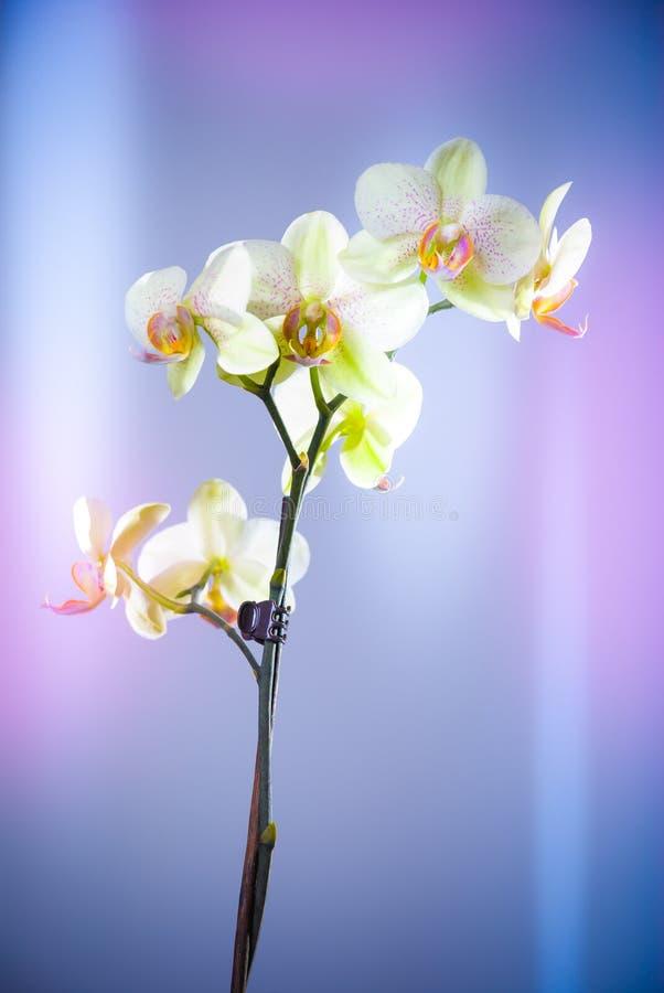 Яркая орхидея на красочной пастельной предпосылке стоковые изображения