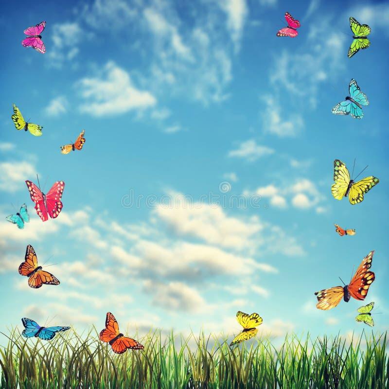 Яркая предпосылка лета с бабочками и травой стоковое изображение rf