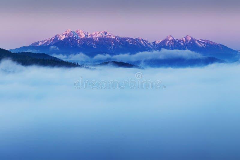 Яркая свертывая сельская местность в выравниваясь свете Живописный день и шикарная сцена весной приурочивают Прикарпатские горы,  стоковое фото