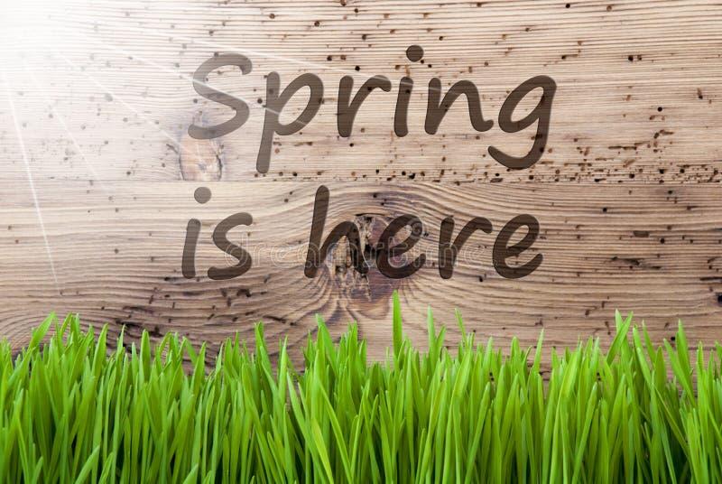 Яркая солнечная деревянная предпосылка, Gras, весна текста здесь стоковое изображение