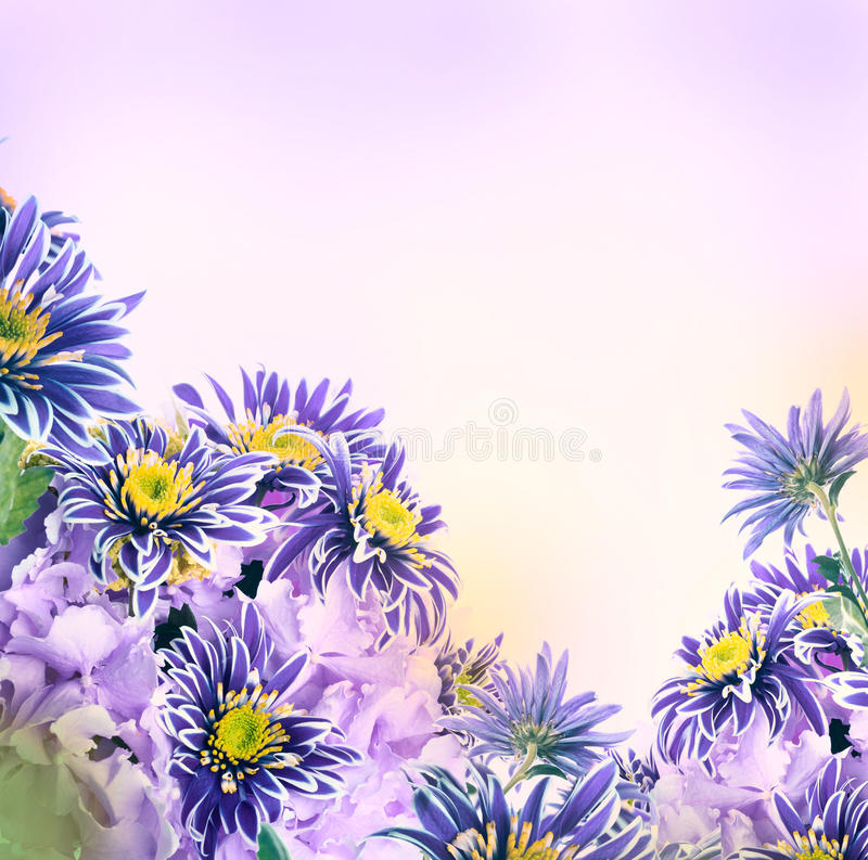 Download Яркая хризантема весны стоковое фото. изображение насчитывающей пинк - 40579718