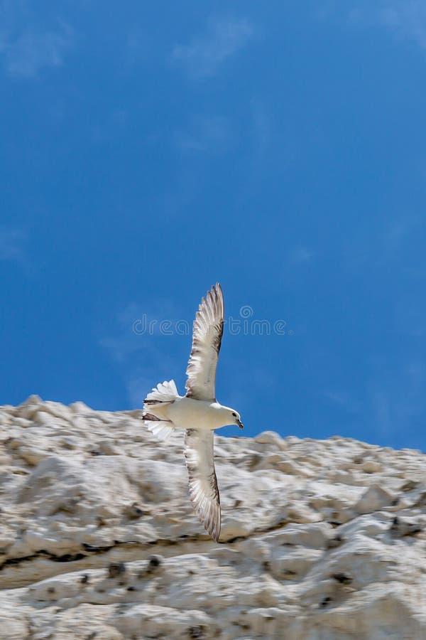 яркая чайка изображения полета солнечная стоковое изображение rf