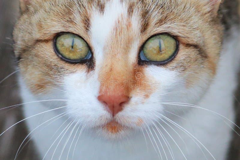 яркие глаза стоковое изображение