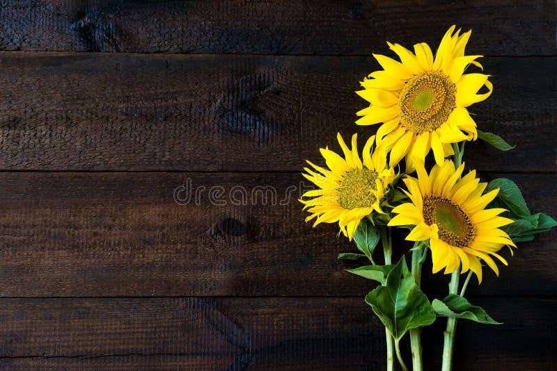 Яркие желтые солнцецветы на доске естественной деревенской текстуры деревянной стоковая фотография rf