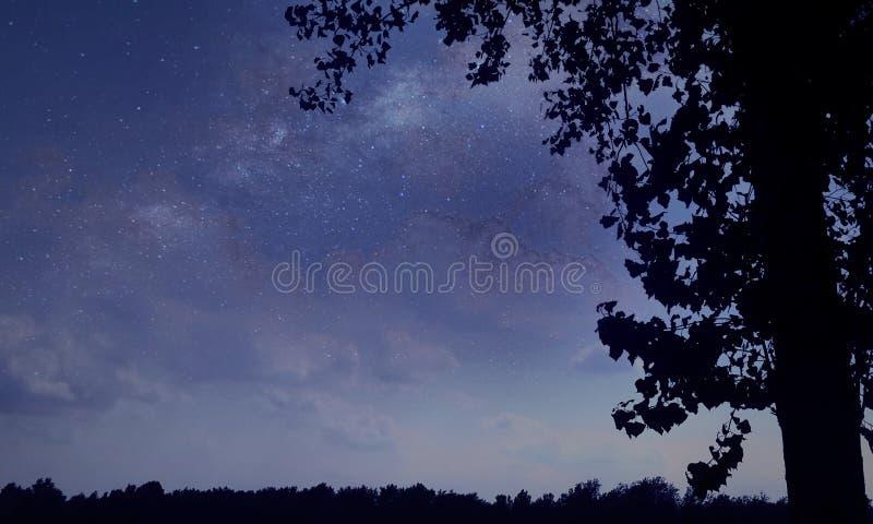 яркие звезды стоковые изображения rf