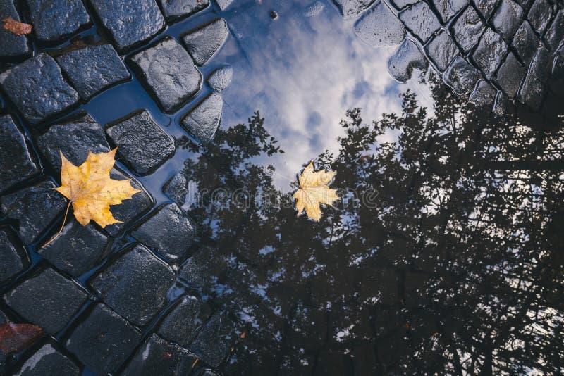 Яркие листья желтого цвета в лужице на земле стоковое изображение