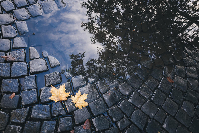 Яркие листья желтого цвета в лужице на земле стоковые фотографии rf