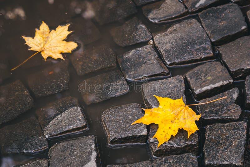 Яркие листья желтого цвета в лужице на земле стоковое фото