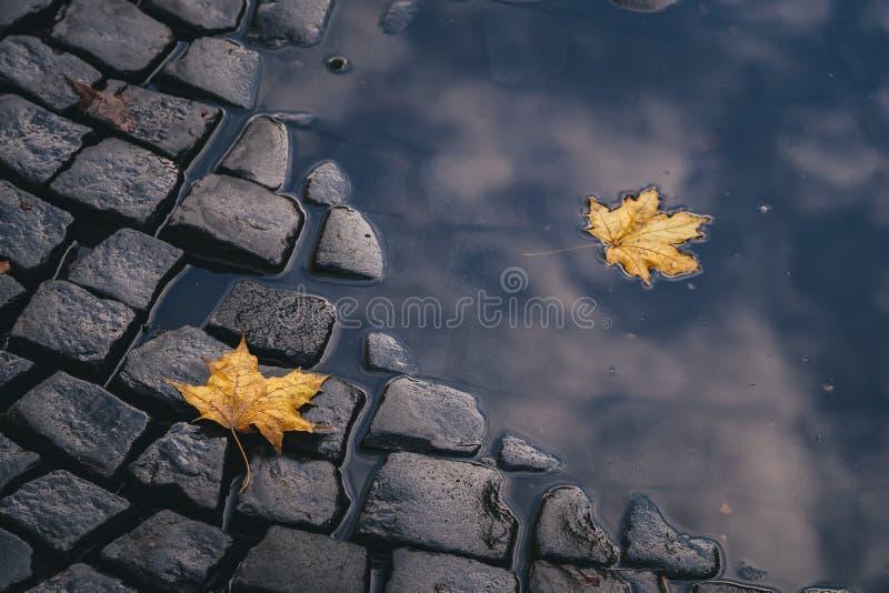 Яркие листья желтого цвета в лужице на земле стоковая фотография