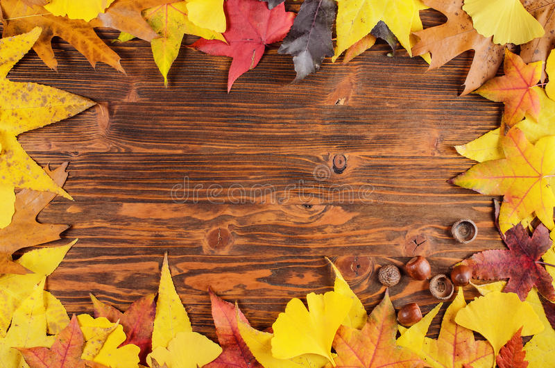 Яркие листья осени и предпосылка рамки жолудя стоковое фото rf