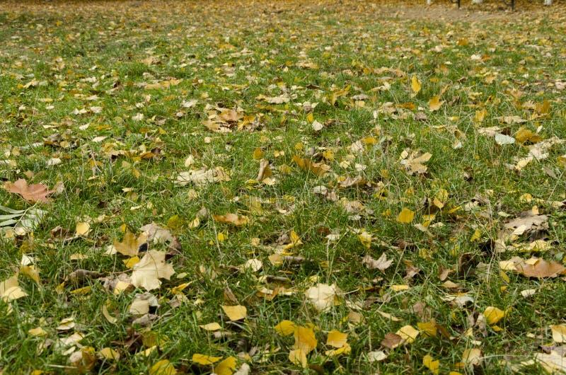 Яркие листья осени на зеленой траве стоковая фотография