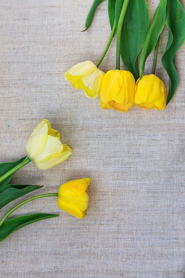 Яркие и палевые тюльпаны аранжировали в рамке на грубом Linen дне рождения пасхе дня ` s матери минималистичного стиля ткани ткан стоковое фото