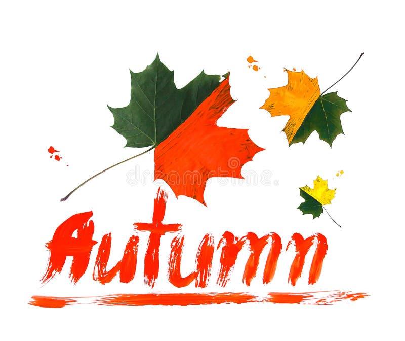Яркие кленовые листы падения украшенные с красками на белой предпосылке Творческий дизайн осени стоковое фото