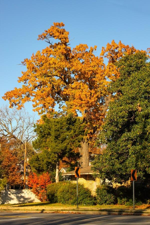Яркие листья осени на высоких деревьях и улице подписывают внутри городской район стоковое изображение rf