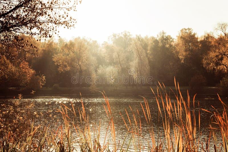 Яркие листья осени на дереве, пруде в погоде осени парка теплой солнечной стоковое изображение