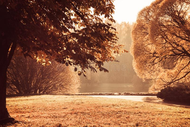 Яркие листья осени на дереве, пруде погоды осени теплом солнечном в парке стоковое фото