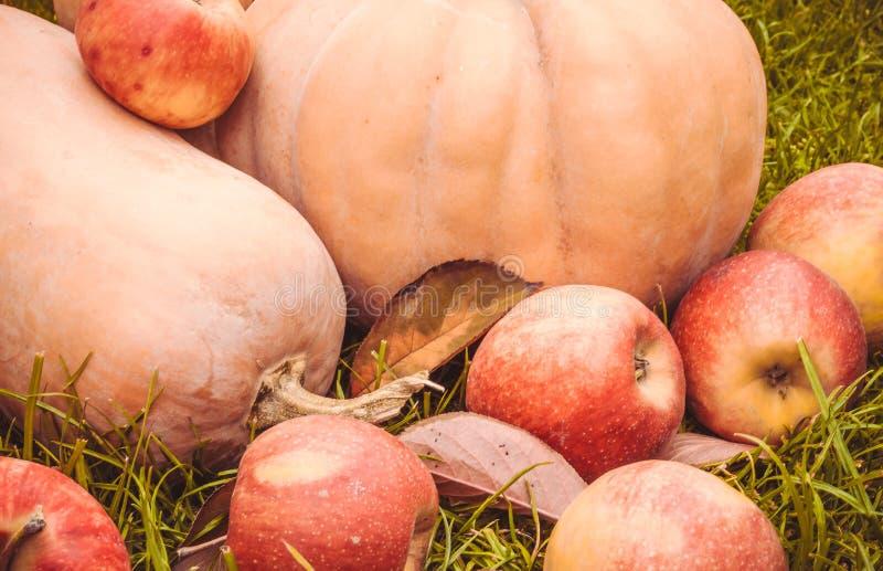 Яркие плодоовощи осени стоковое изображение rf