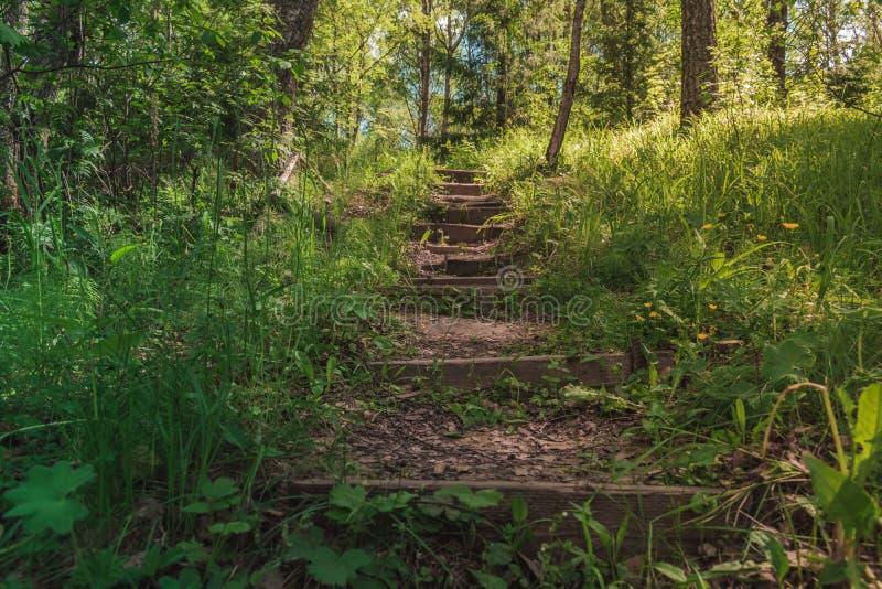 Яркие солнечные деревянные лестницы в середине леса идя вверх с деревьями вокруг стоковое фото rf