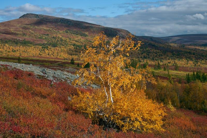 Яркие цвета осени в долине стоковое изображение rf
