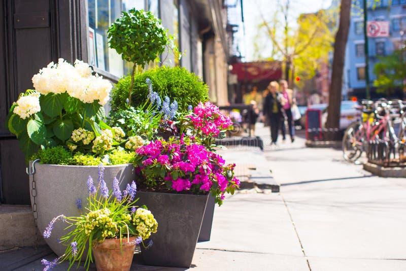 Яркие цветки в баке на улицах Нью-Йорка стоковая фотография