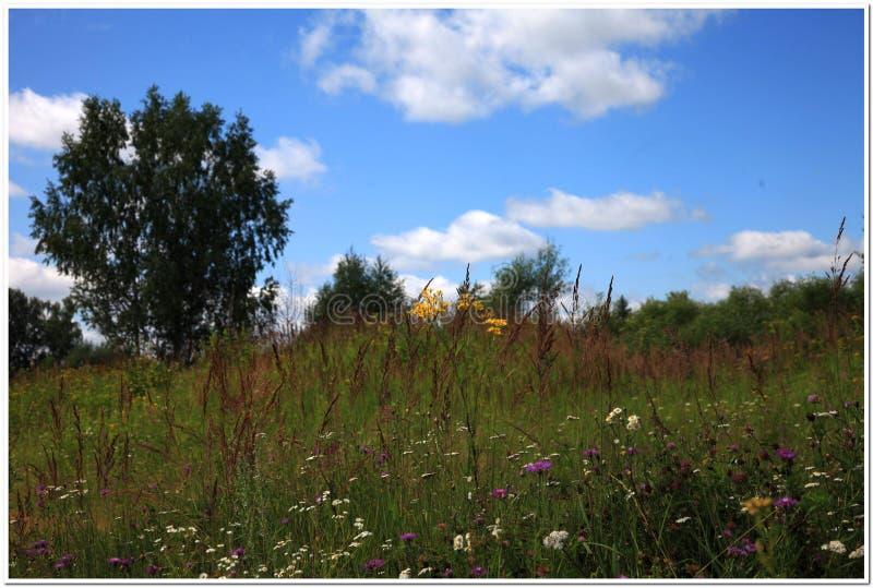 яркие цветки одичалые стоковые фото