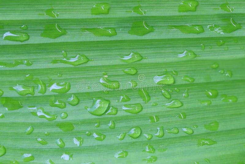 Яркие ые-зелен листья и имеют воду капельки в воздухе утра стоковые изображения