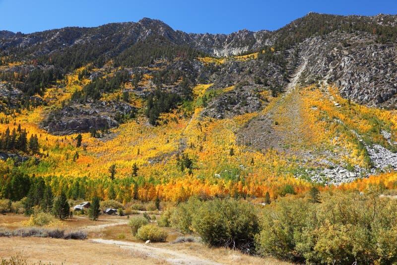 яркие shrubs цветов стоковое фото rf