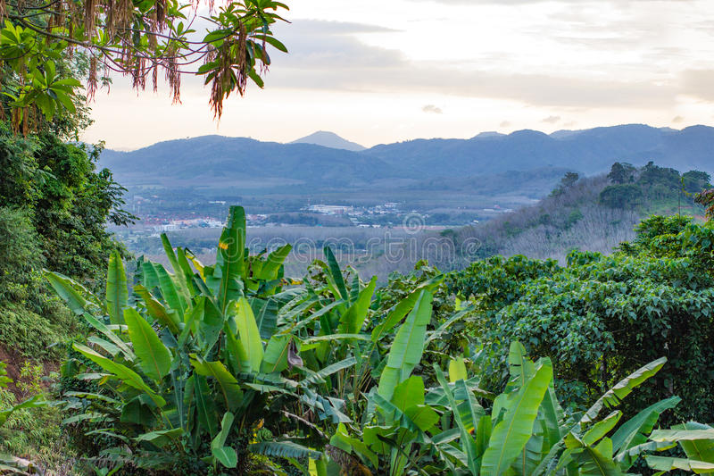 Яркий внешний вид на дожде f охраны окружающей среды и сохранять тропическом стоковое изображение rf