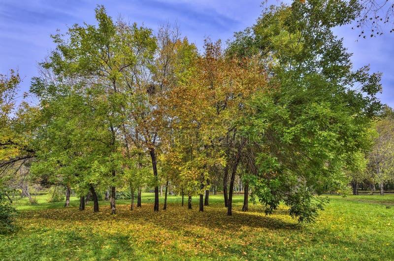 Яркий красочный ландшафт осени в парке города стоковые изображения