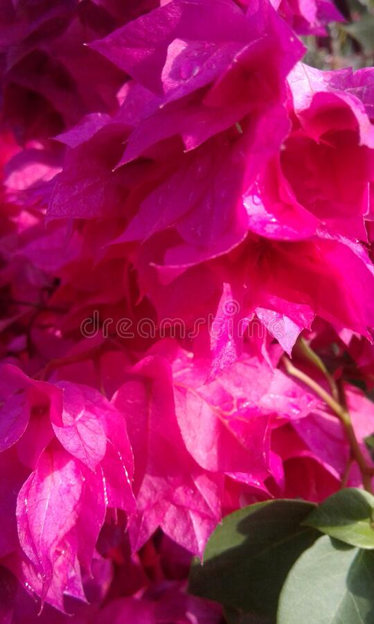 Яркий цветок утром стоковое изображение