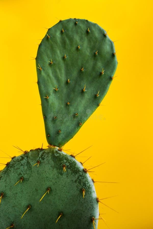 Яркий ый-зелен Opuntia кактуса на напористой пастельной желтой предпосылке стоковая фотография