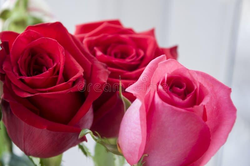 Яркое красное, апельсин, пинк и белые розы в букете стоковое фото rf