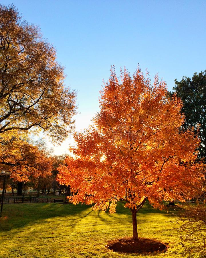 Яркое листво падения стоковая фотография