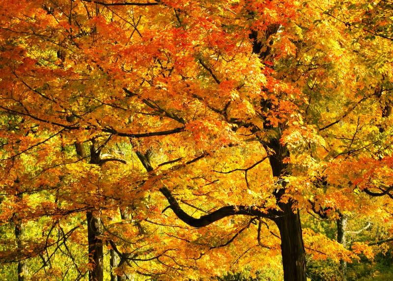 Яркое листво падения стоковое фото