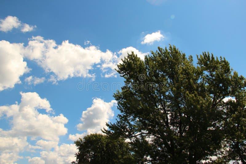 яркое небо стоковые фото